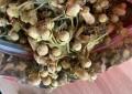 化州橘红高产种植,掌握这几点管理方法,能提早结果产量增加