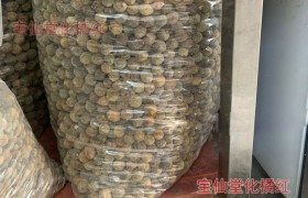 正毛化州橘红胎果,高品质胎果化橘红直径1.5-2CM(最小果)